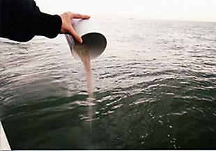 海洋に散骨